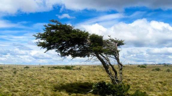 A famosa árvore torta pelo vento, um dos símbolos da Terra do Fogo, no sul do Chile. Quando passamos por aí, já não havia luz. Essa foto foi tirada dias depois pelos nossos amigos suiços, Marco e Tina