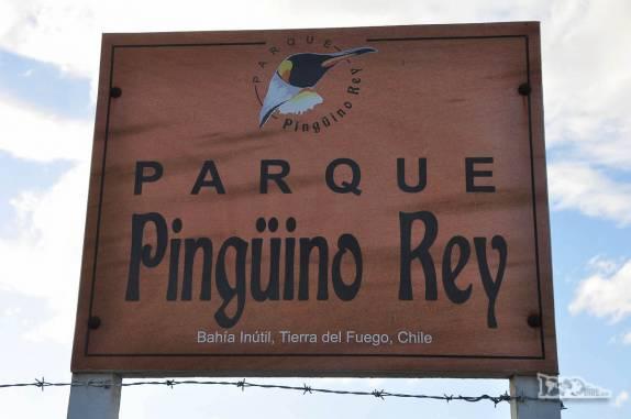 Pinguinera na Terra do Fogo, no sul do Chile
