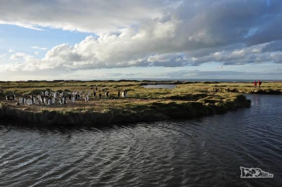 Turistas observam pinguins rei em uma pinguinera na Terra do Fogo, no sul do Chile