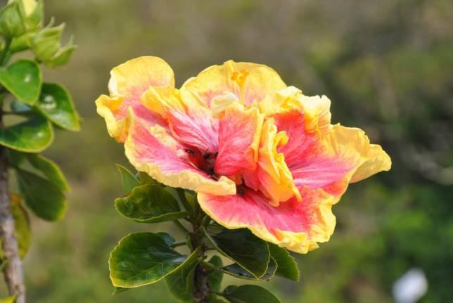 Plantando no Jardim do F?rum - Forum Espirita